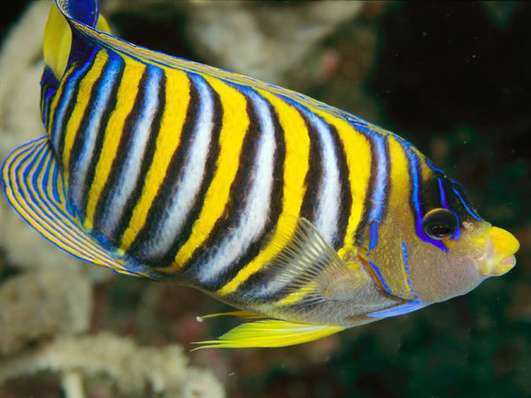 世界十大色彩斑斓的海洋生物