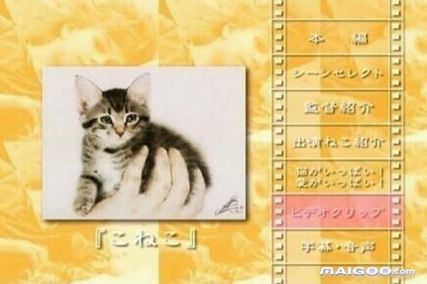 十大关于猫的电影盘点 你不可错过的经典猫咪电影