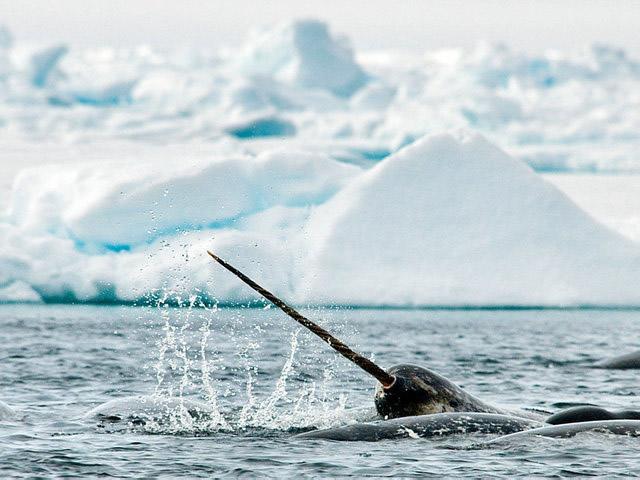 关于北极地区的10大惊人奥秘 了解北极地区令人震惊的奥秘