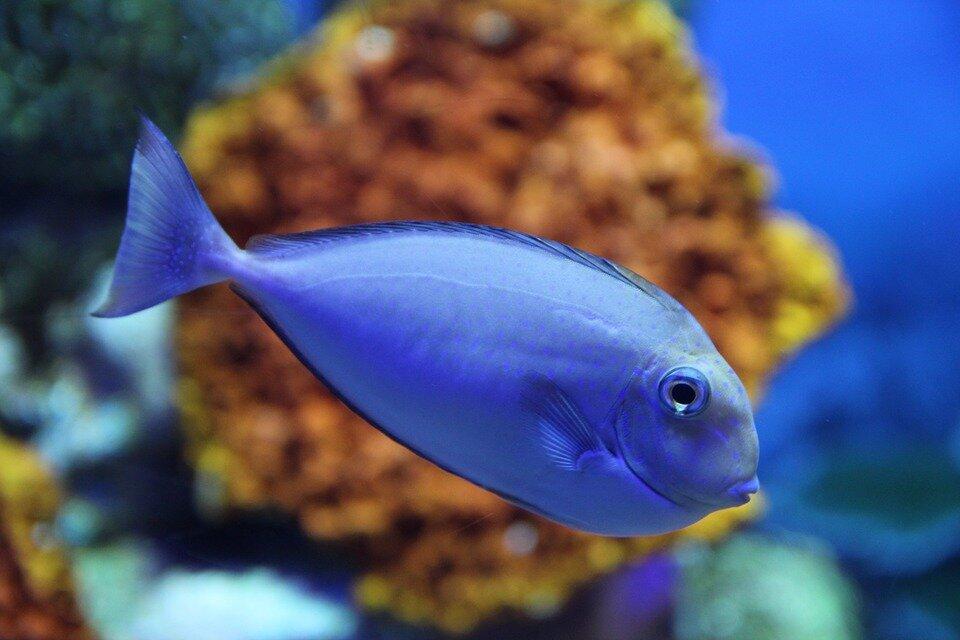 海洋动物图片大全 海洋动物图片及名称图片